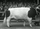 The pride of Friesland, pedigree cattle